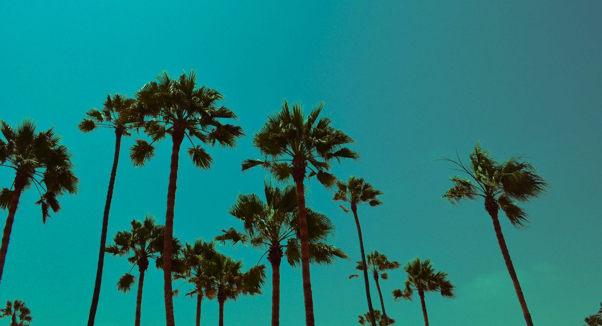 los-angleles-palm-trees